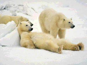 Как навсегда избавиться от усталости и лени